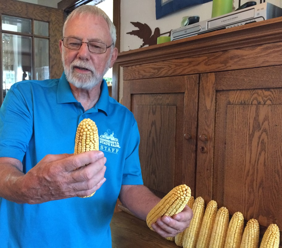 Ron Kelsey examines an ear of corn